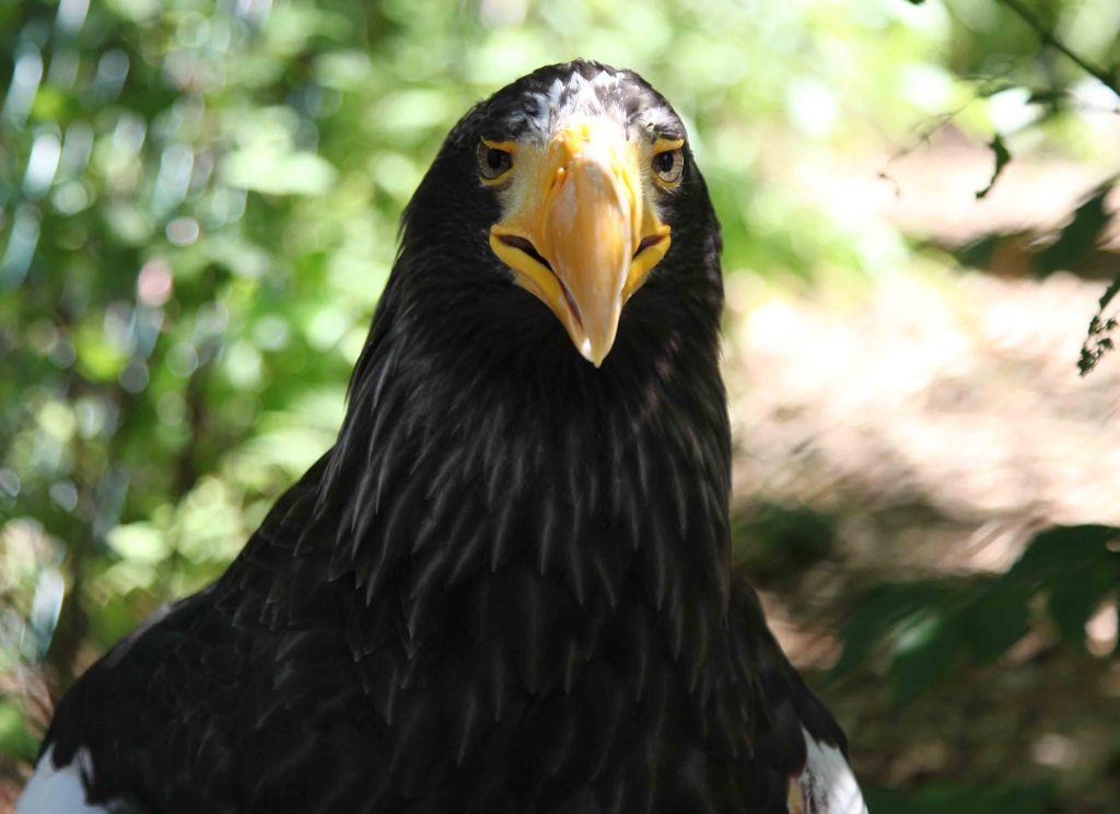 WP Walsrode birdpark 38