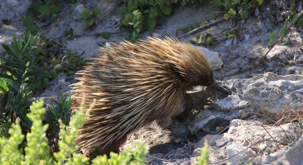 WP Kangaroo island 28